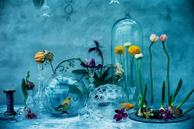 Denise-grunstein-blommor
