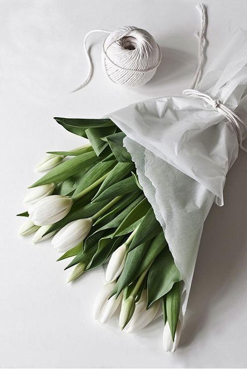 Tulips-momolivingonline