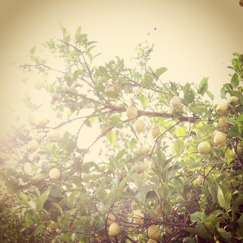 Wedding-lemon